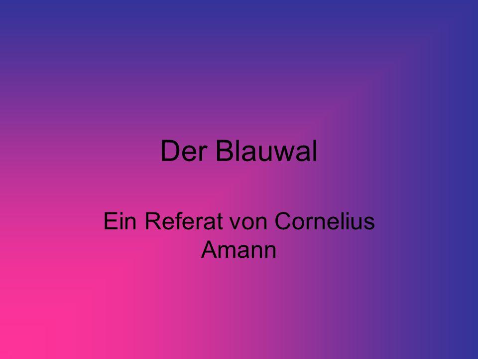Ein Referat von Cornelius Amann