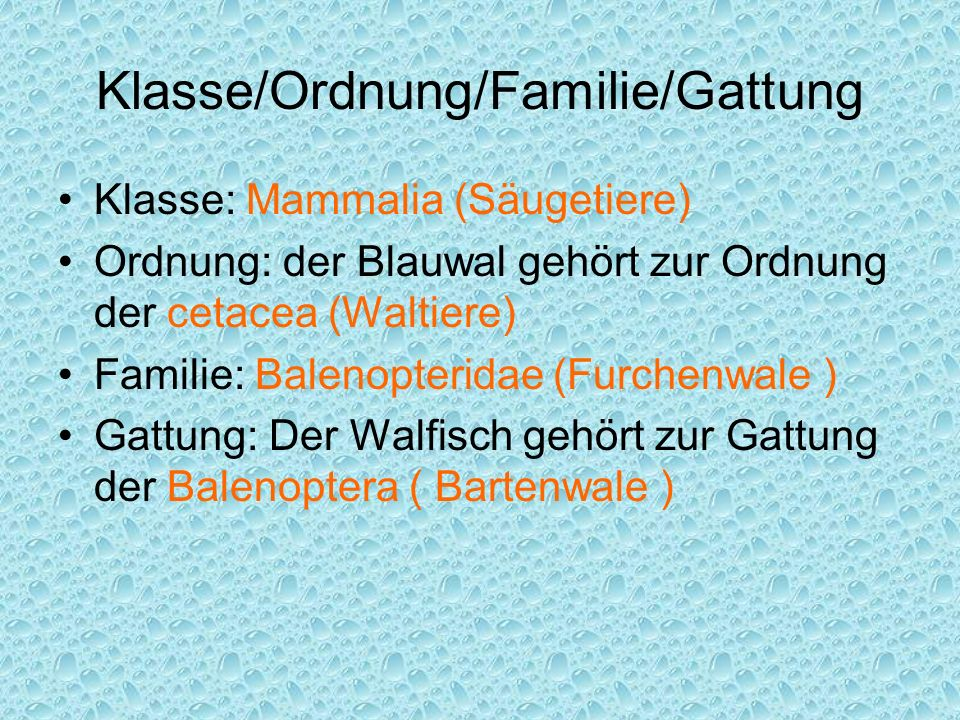 Klasse/Ordnung/Familie/Gattung