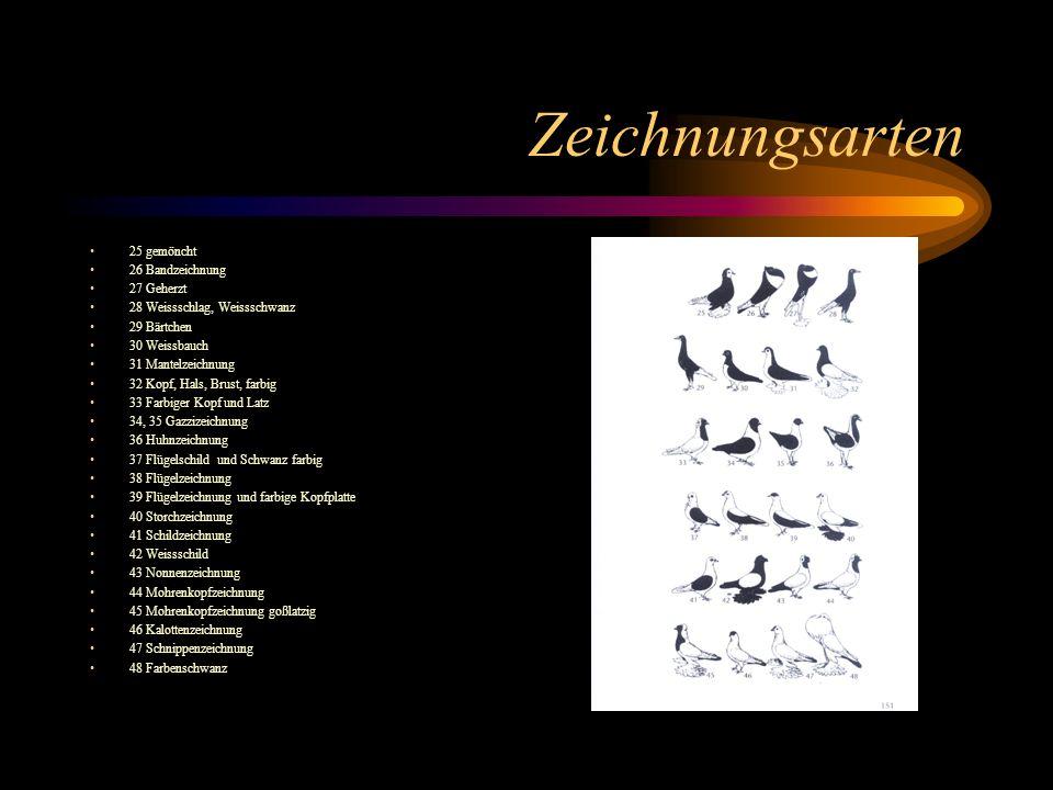 Zeichnungsarten 25 gemöncht 26 Bandzeichnung 27 Geherzt