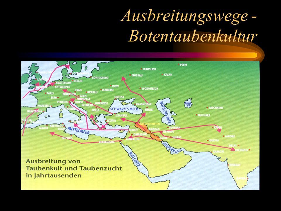 Ausbreitungswege - Botentaubenkultur