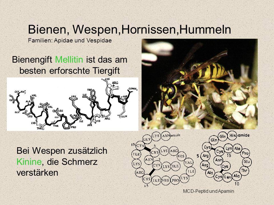 Bienengift Mellitin ist das am besten erforschte Tiergift