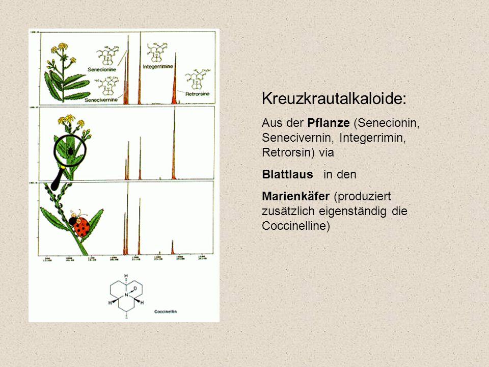 Kreuzkrautalkaloide: