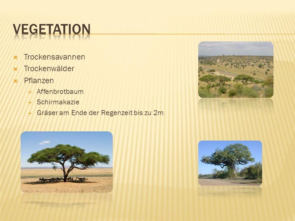 Vegetation Trockensavannen Trockenwälder Pflanzen Affenbrotbaum