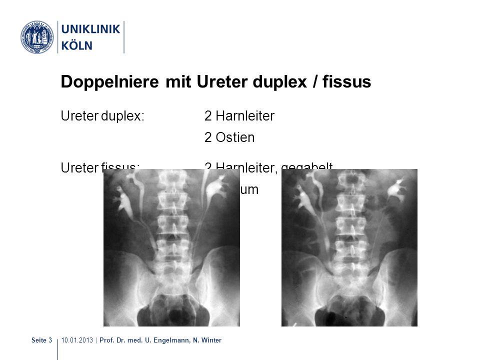 Doppelniere mit Ureter duplex / fissus