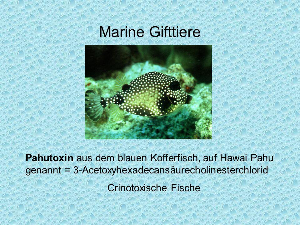 Marine Gifttiere Pahutoxin aus dem blauen Kofferfisch, auf Hawai Pahu genannt = 3-Acetoxyhexadecansäurecholinesterchlorid.