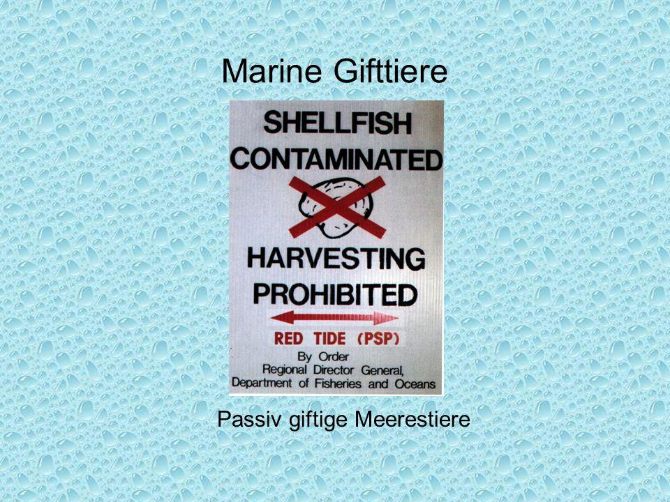 Passiv giftige Meerestiere