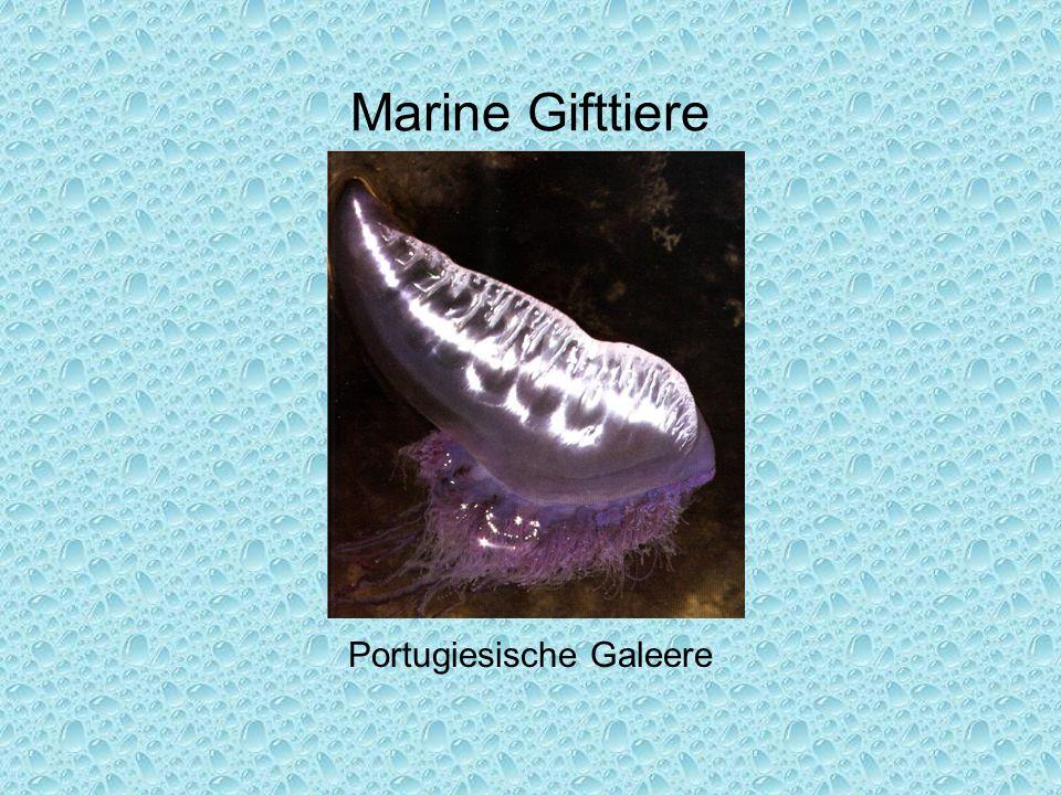 Portugiesische Galeere