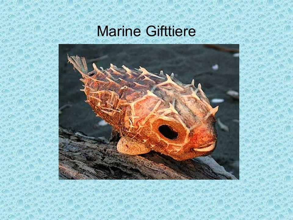 Marine Gifttiere