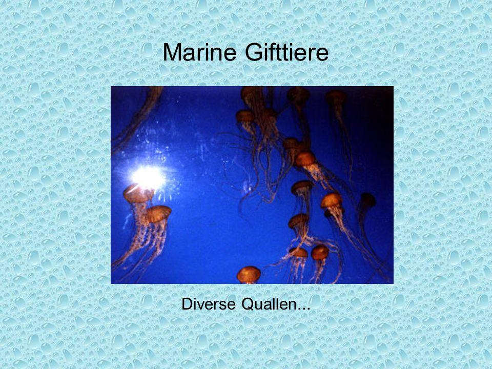 Marine Gifttiere Diverse Quallen...