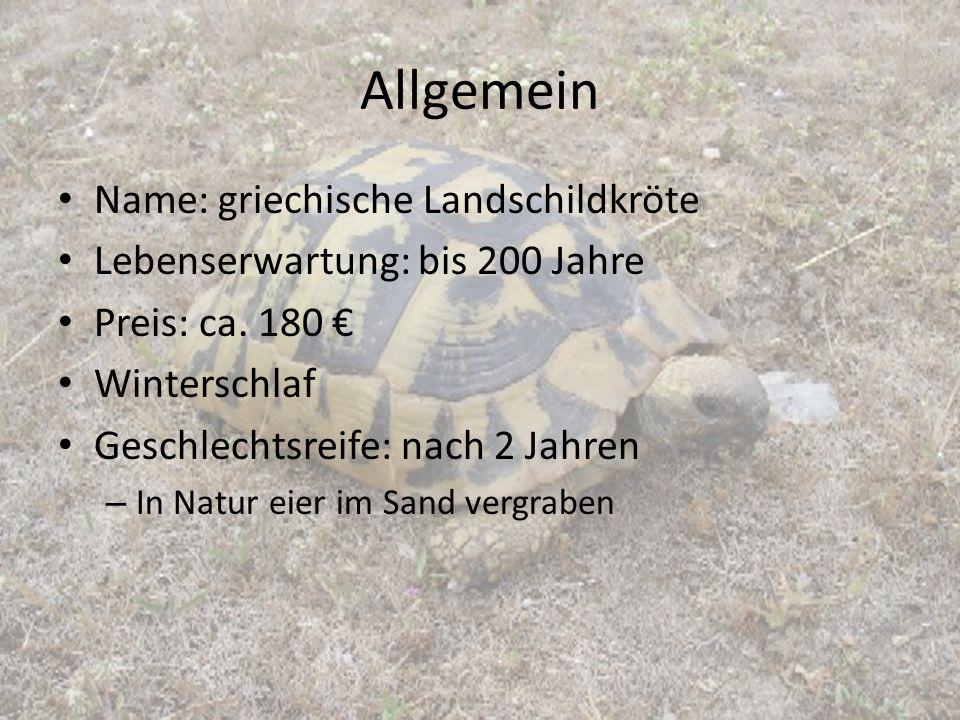Allgemein Name: griechische Landschildkröte
