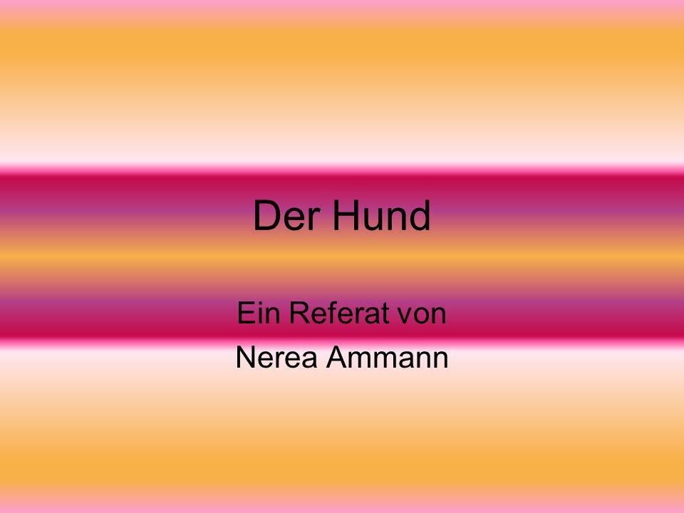 Ein Referat von Nerea Ammann