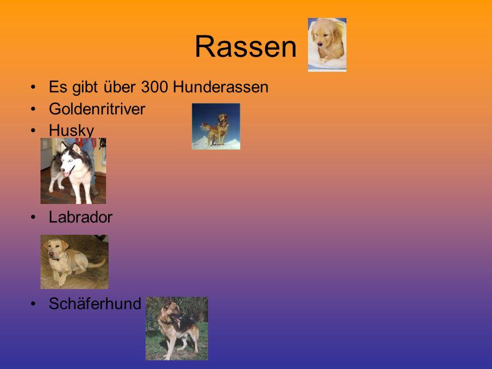 Rassen Es gibt über 300 Hunderassen Goldenritriver Husky Labrador