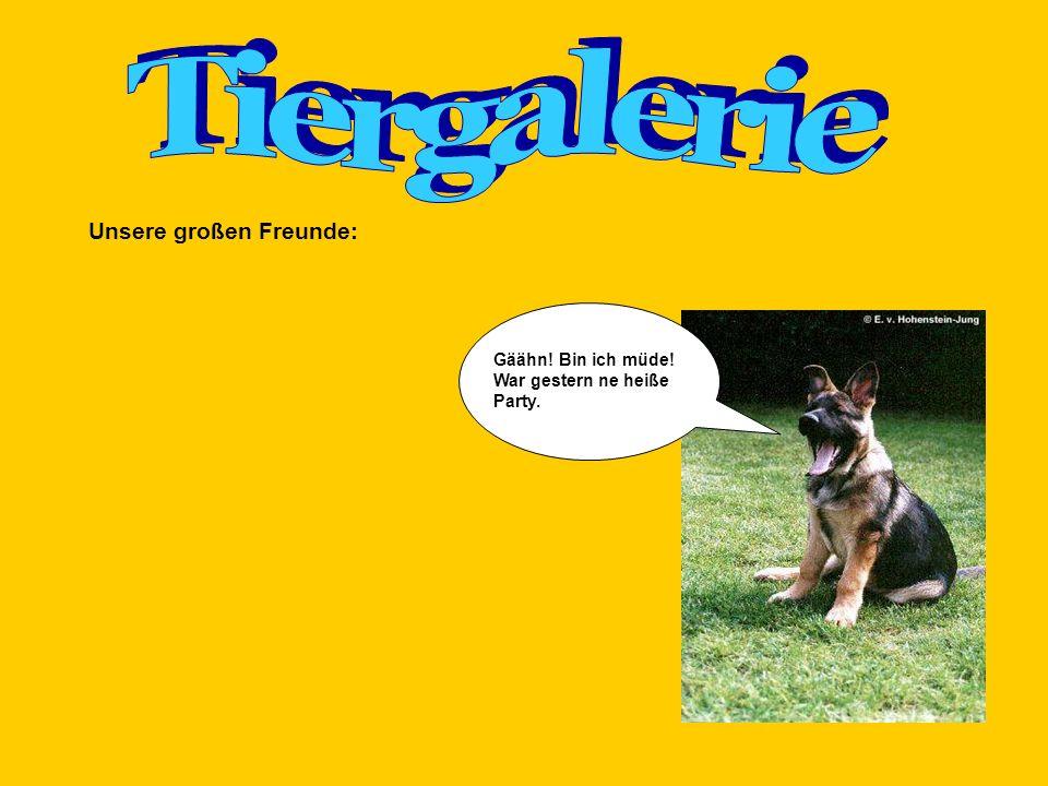 Tiergalerie Unsere großen Freunde: Gäähn! Bin ich müde!