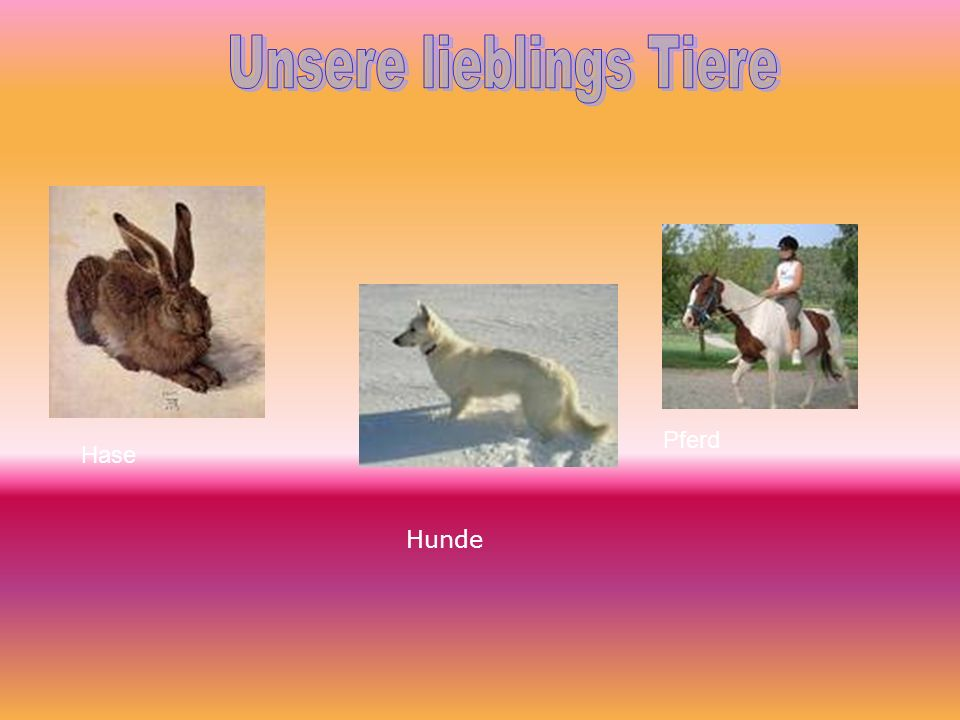 Unsere lieblings Tiere