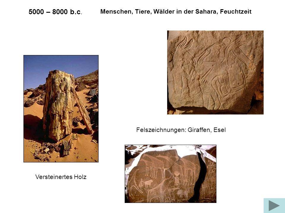 5000 – 8000 b.c. Menschen, Tiere, Wälder in der Sahara, Feuchtzeit