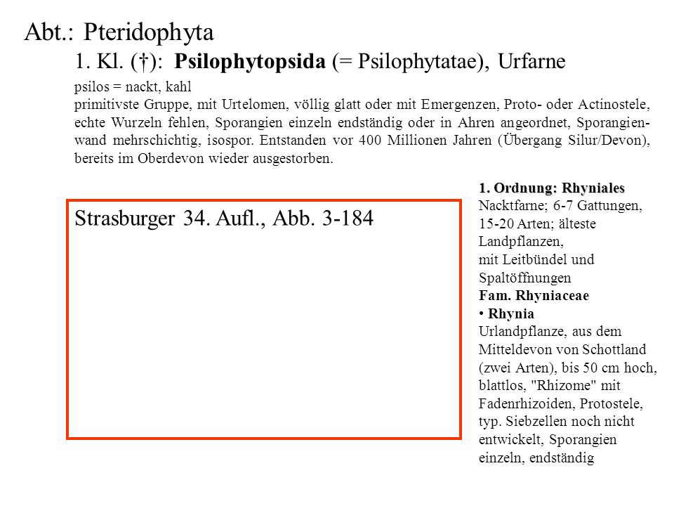 1. Kl. (†): Psilophytopsida (= Psilophytatae), Urfarne