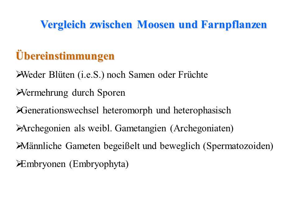 Vergleich zwischen Moosen und Farnpflanzen