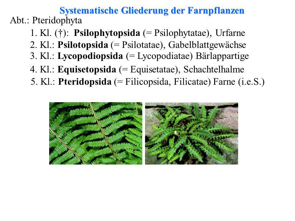 Systematische Gliederung der Farnpflanzen Abt.: Pteridophyta