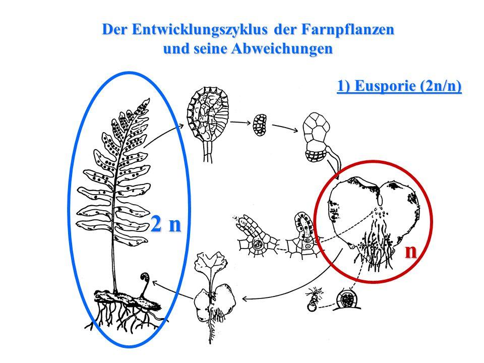 Der Entwicklungszyklus der Farnpflanzen und seine Abweichungen