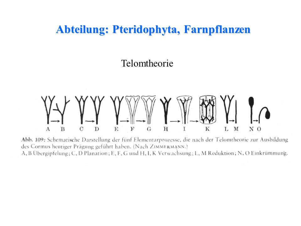 Abteilung: Pteridophyta, Farnpflanzen