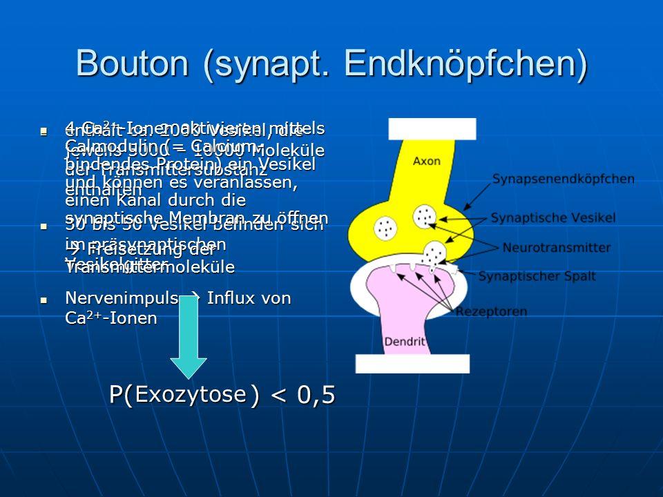 Bouton (synapt. Endknöpfchen)