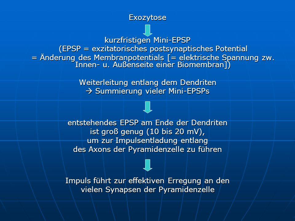 kurzfristigen Mini-EPSP