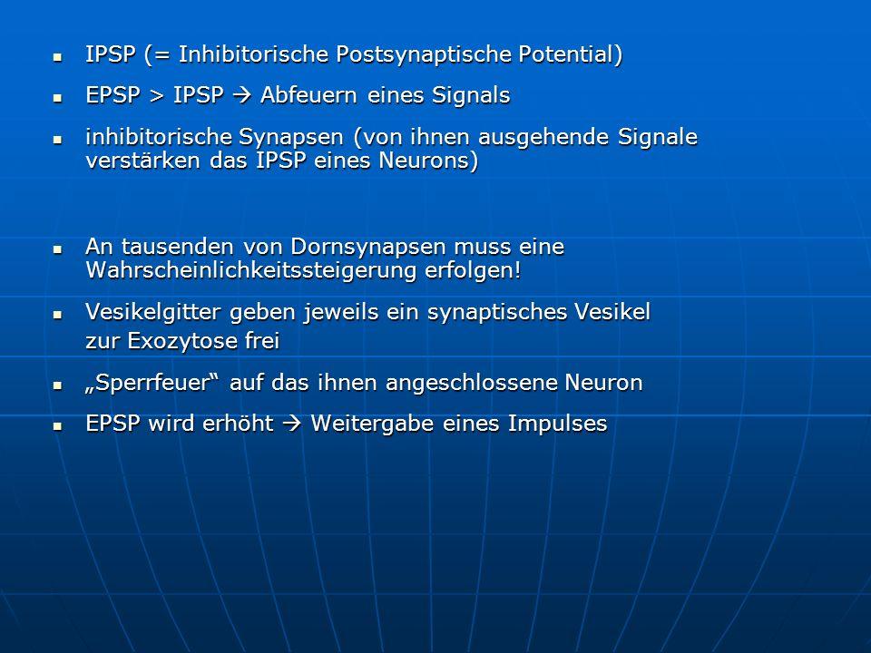 IPSP (= Inhibitorische Postsynaptische Potential)