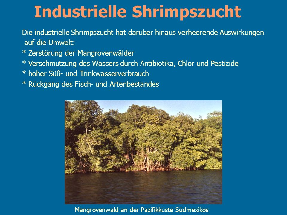 Industrielle Shrimpszucht