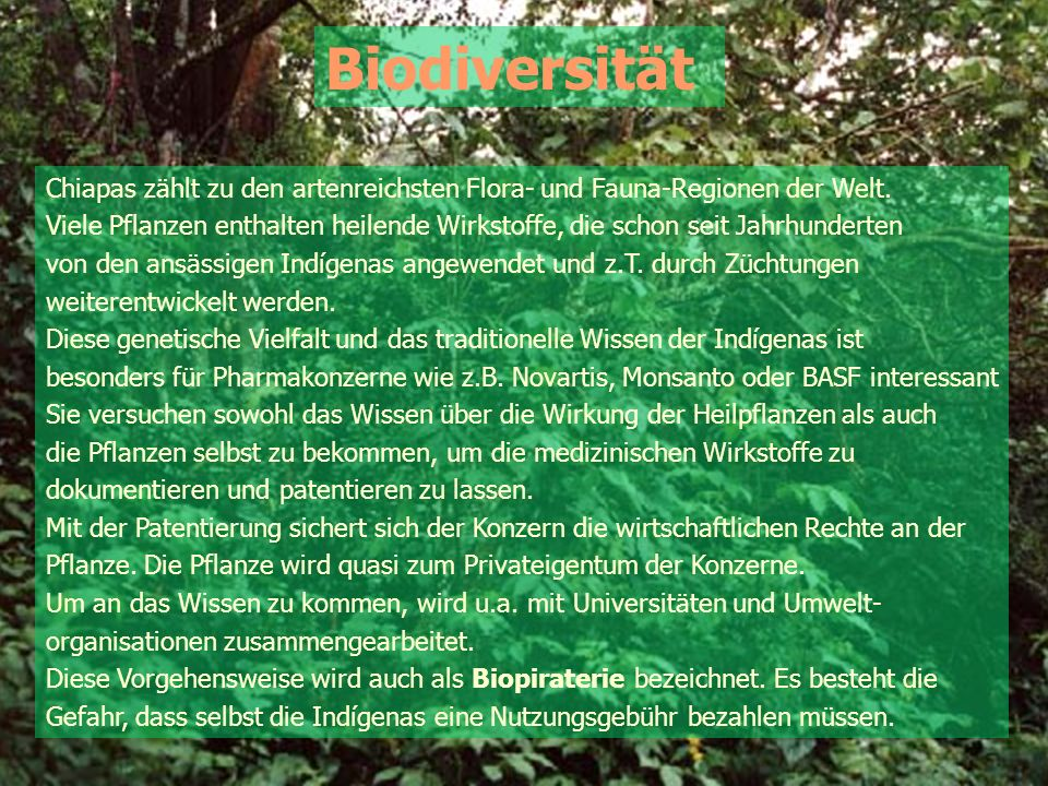 Biodiversität Chiapas zählt zu den artenreichsten Flora- und Fauna-Regionen der Welt.