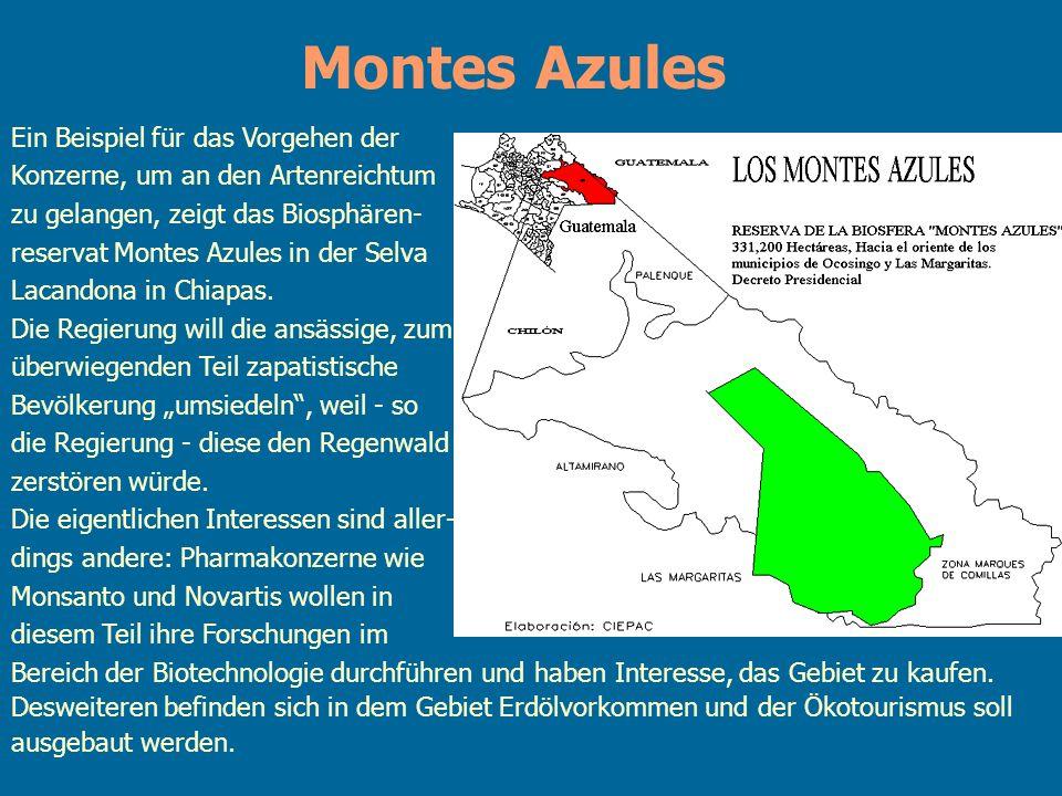 Montes Azules Ein Beispiel für das Vorgehen der