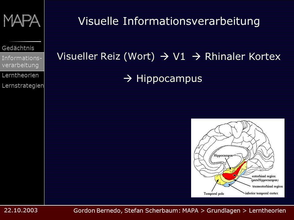 Visuelle Informationsverarbeitung