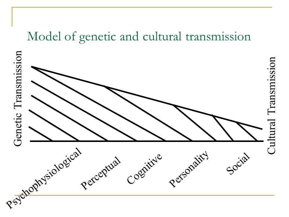 Model of genetic and cultural transmission