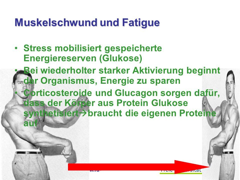 Muskelschwund und Fatigue