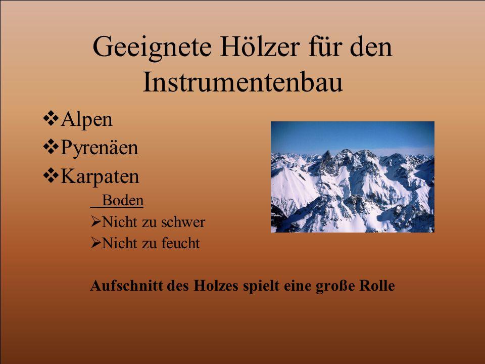 Geeignete Hölzer für den Instrumentenbau