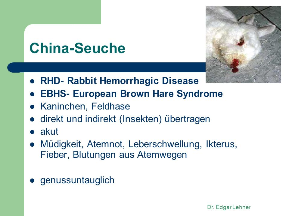 China-Seuche RHD- Rabbit Hemorrhagic Disease