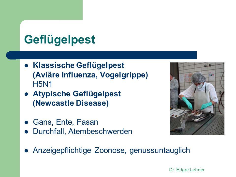 Geflügelpest Klassische Geflügelpest (Aviäre Influenza, Vogelgrippe)
