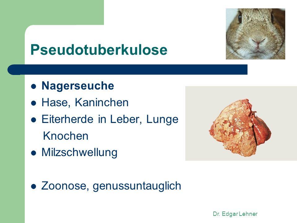 Pseudotuberkulose Nagerseuche Hase, Kaninchen