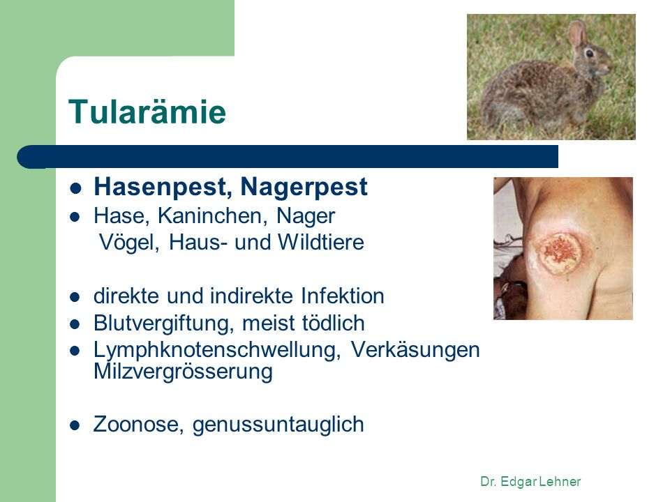 Tularämie Hasenpest, Nagerpest Hase, Kaninchen, Nager