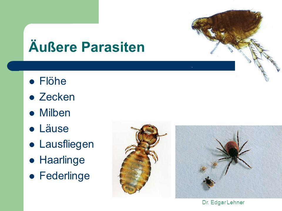 Äußere Parasiten Flöhe Zecken Milben Läuse Lausfliegen Haarlinge
