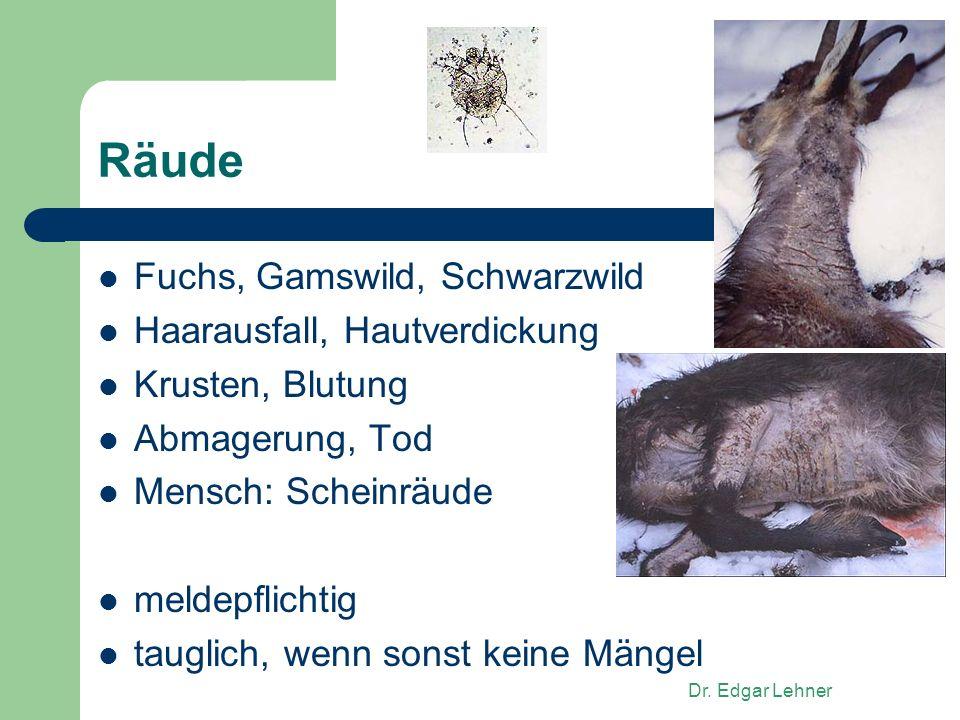 Räude Fuchs, Gamswild, Schwarzwild Haarausfall, Hautverdickung
