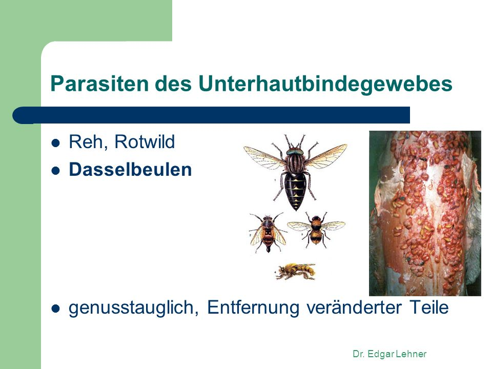 Parasiten des Unterhautbindegewebes