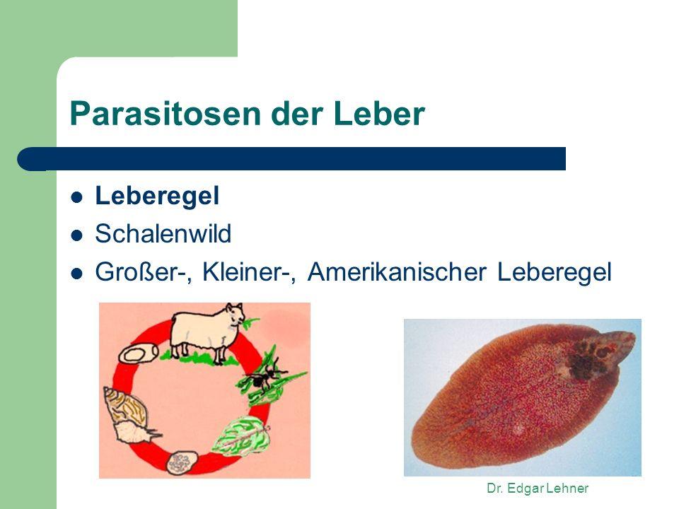 Parasitosen der Leber Leberegel Schalenwild