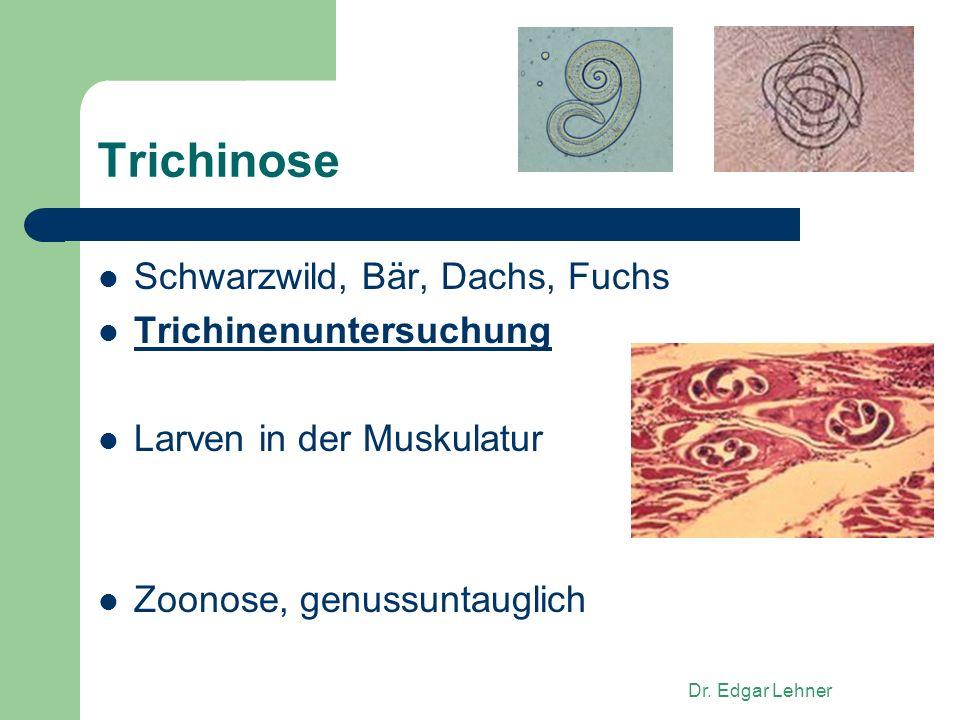Trichinose Schwarzwild, Bär, Dachs, Fuchs Trichinenuntersuchung