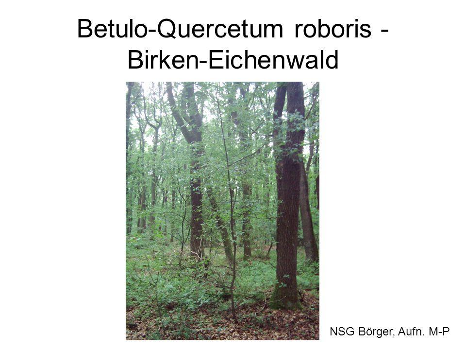 Betulo-Quercetum roboris - Birken-Eichenwald