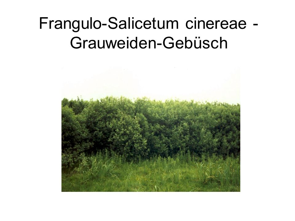 Frangulo-Salicetum cinereae - Grauweiden-Gebüsch
