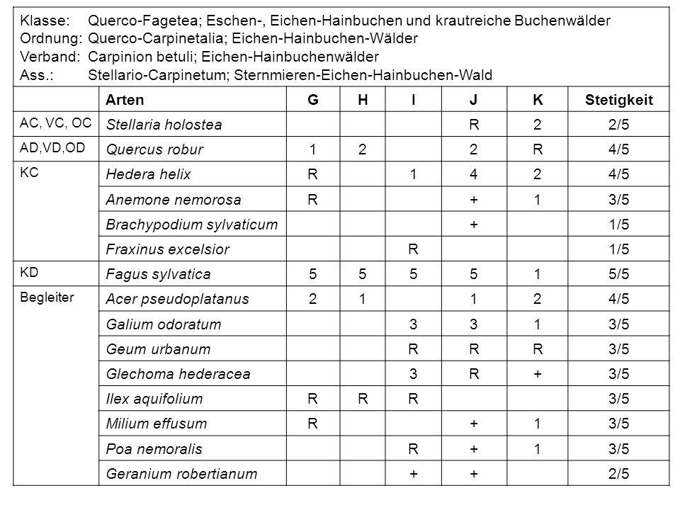 Ordnung: Querco-Carpinetalia; Eichen-Hainbuchen-Wälder