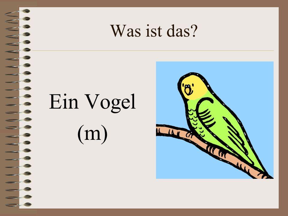 Was ist das Ein Vogel (m)