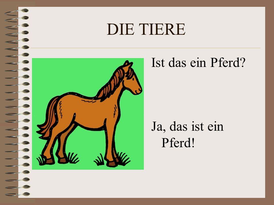 DIE TIERE Ist das ein Pferd Ja, das ist ein Pferd!