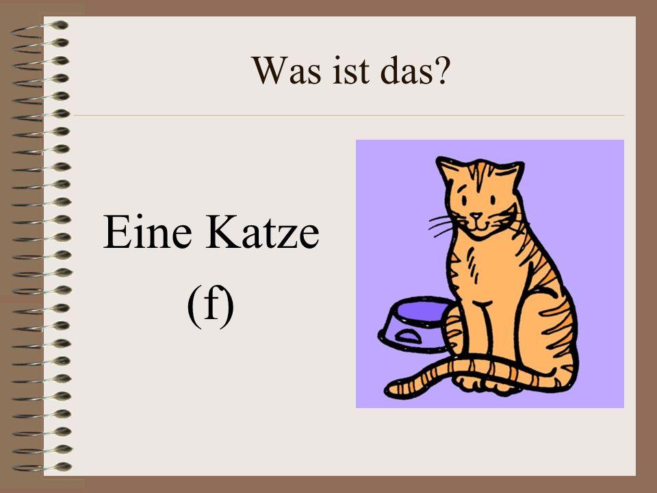 Was ist das Eine Katze (f)