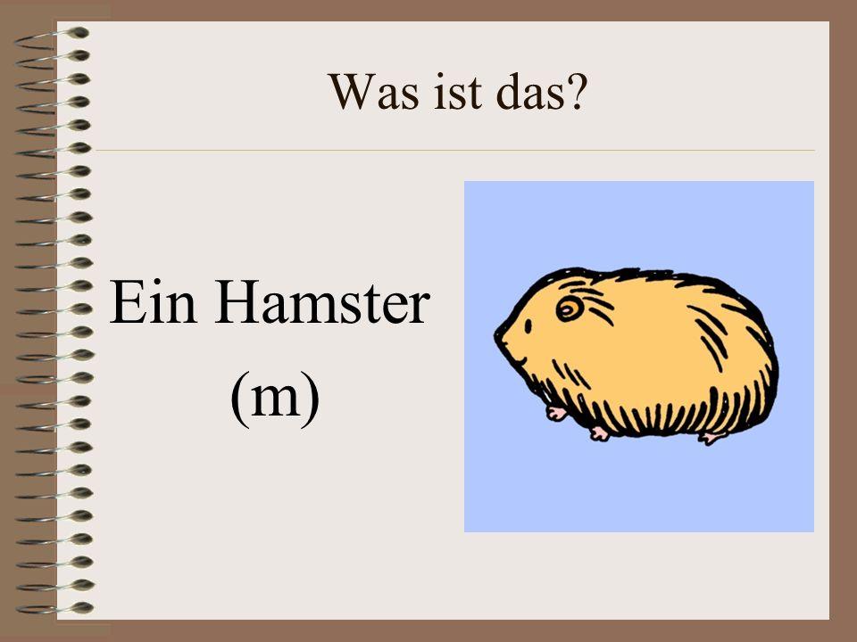 Was ist das Ein Hamster (m)